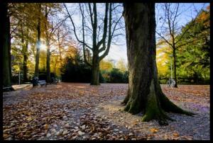 Herfst in Park Oog in Al